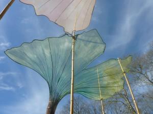 la transparence des feuilles de ginkgo