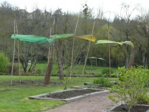 vue d'ensemble des trois grandes feuilles de Gingko au jardin Camifolia